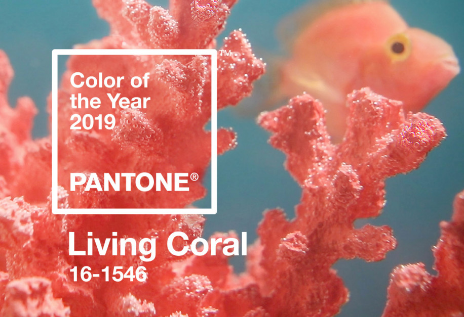 living coral wesele