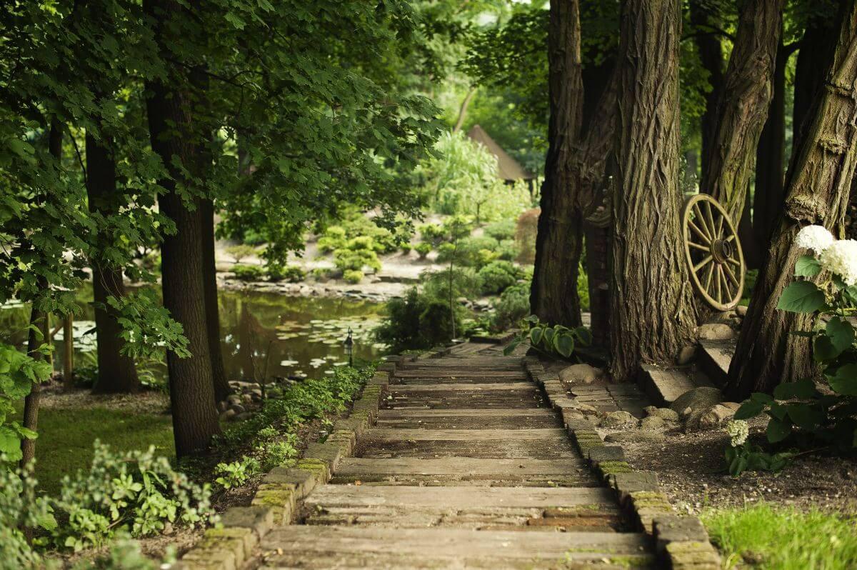 uzdrawiająca moc natury hotel forrest ścieżka